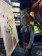 """Игра """"Накорми ящерицу"""". Детский музей. г. Полоцк, 2018 г."""